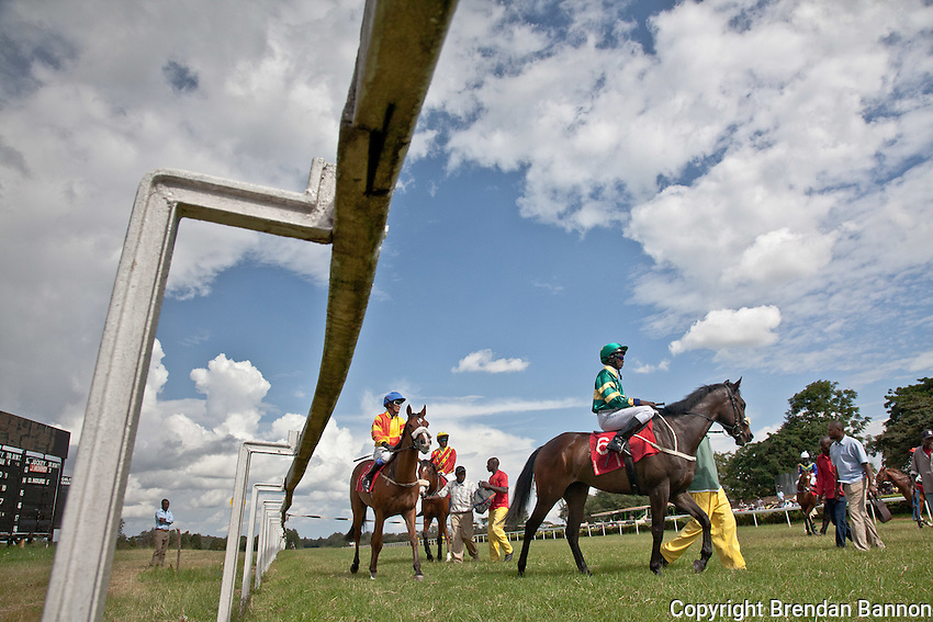 Horses and jockeysa re coaxed into the starting gates before the start of  the Kenya Derby.