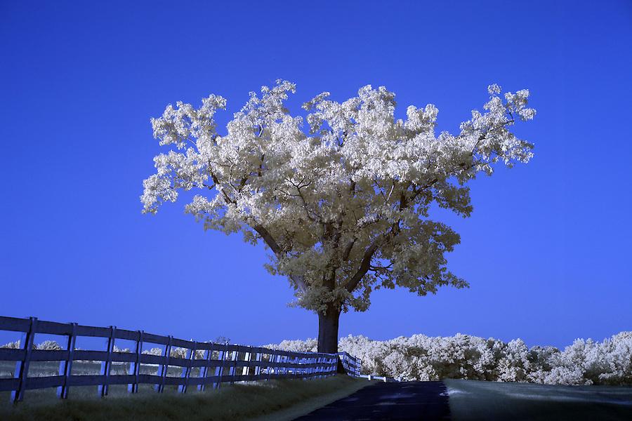 A lone tree on a farm in Crozet, VA.