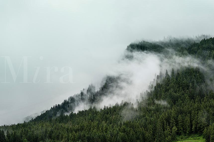 Soft clouds roll across a mountainside spruce forest, Alaska, USA.