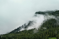 Soft clouds roll across a mountainside spruce forest, Alaska, USA.