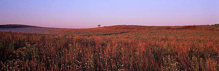 63863-019.20 Prairie at Nachusa Grasslands near Nachusa   IL