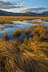 Yellowstone National Park, WY: Evening light on still waters and grasses of Swan Lake Flats with Electric Peak in the distance