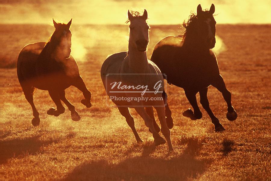 Three horses running in the morning light