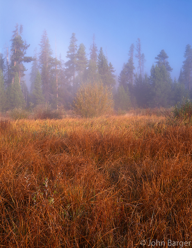 ORCAC_089 - USA, Oregon, Deschutes National Forest, Autumn colored marsh grass and distant fog softened forest at Crane Prairie.