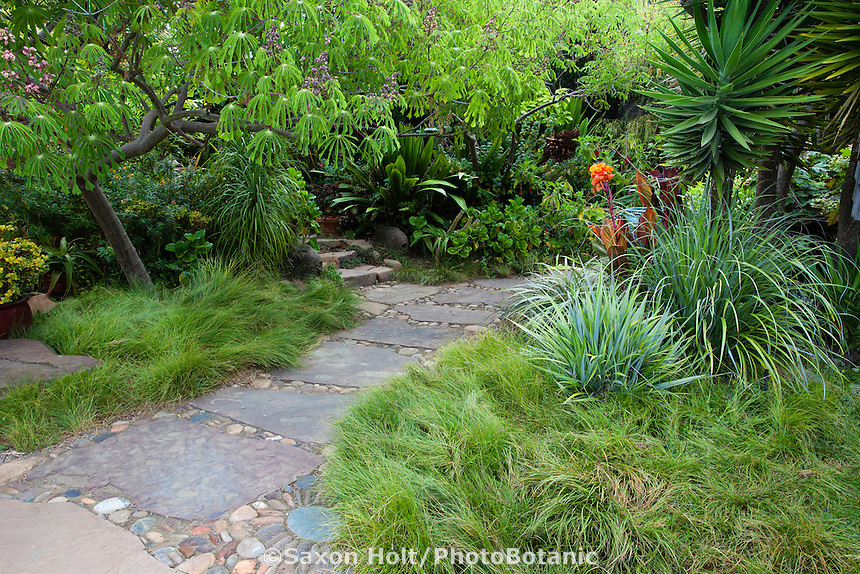 Stepping stone walkway through California backyard garden with Sedge meadow lawn substitute (Carex pansa) and foliage plants; Sherry Merciari garden