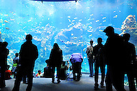 Dec. 30, 2009 - San Francisco, California, USA - People view the large variety of fish and other creatures on display in the huge aquarium at the California California Academy of Sciences Natural History Museum in San Francisco Wednesday December 30, 2009.  (Photo by Alan Greth)seum in San Francisco Wednesday December 30, 2009.San