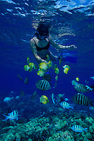 Woman snorkeling with tropical fish at Hanauma bay, Oahu
