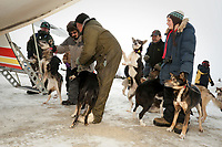 Volunteers at Nikolai hold dropped dogs as they wait their turn to load the dogs onto a Pennair Caravan for a flight back to Anchorage during Iditarod 2009