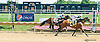Hidden Blitz winning at Delaware Park on 8/12/15