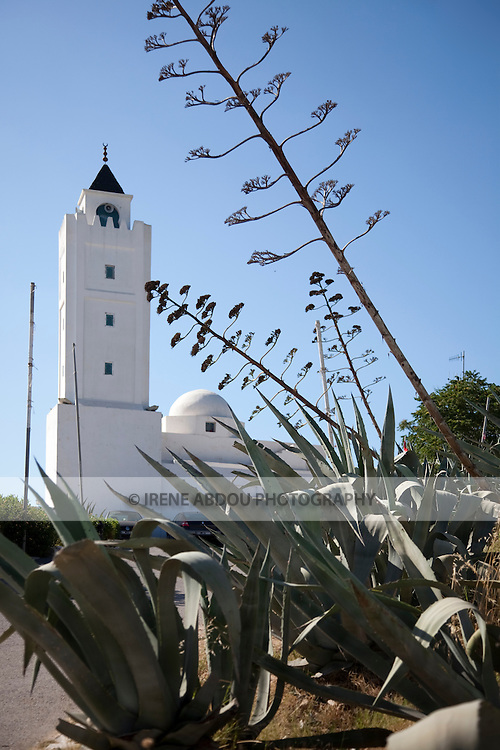 A mosque in Sidi Bou Said, Tunisia rises up, aloe in the foreground.