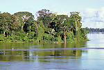 Amazonia, Brazil. Tall trees of the 'varzea' beside the Tefe river in bright sunlight.