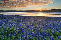 Golden Glow Over Bluebonnets - This was taken at the lake as the sunrise cast this golden glow over the clouds and lake with the bluebonnet landscape. Springtime in the Texas hill country is my favorite time because of all the wildflowers everywhere, especially when you come across a big field of bluebonnets it can magical landscape.
