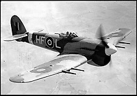 BNPS.co.uk (01202 558833)<br /> Pic:   AndrewBoakes/BNPS<br /> <br /> A Typhoon in the air.<br /> <br />  The remains of a 'lost' British airman have been discovered 75 years after his plane crashed in Holland.<br /> <br /> Flight Sergeant William Hurrell was killed when his RAF Typhoon was hit by an enemy plane as he flew to the aid of besieged paratroopers at Arnhem in 1944.<br /> <br /> The single-seater fighter-bomber was seen to plummet into farmland 12 miles north of Dutch city.