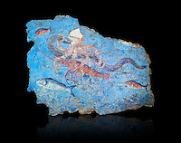 Roman Fresco with a fight scene between octopus, lobster and eel, 125-150 AD. (mosaico fauna marina da porto fluviale di san paolo), museo nazionale romano ( National Roman Museum), Rome, Italy. inv. 463Z4.   Against a black background.<br /> <br /> Excavated from the Porto di San Paolo near the Via Portuense, these frescoes decorated the thermal area of a suburban Roman Villa. The reconstructed fresco fragments, depict a group of three fighting animals: an octopus (octopus vulgaris) clutches a moray eel (muraena helena) and a lobster (palinurus vulgaris) in its tentacles; around them mud mullets (mullus barbatus) and rock mullets (mullus surmuletus) try to escape. Incriptions on the frescoes suggesy that the villa owner was from Alexandria where this style of nautical mosaic and fresco  decorations is found.