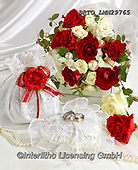 Alfredo, FLOWERS, BLUMEN, FLORES, photos+++++,BRTOLMN29765,#f#, EVERYDAY ,rose,roses