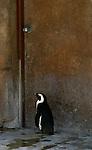 2007 Copyright  Whitney Lauren Robinson Stubbart / Lambi Arts Photography Animals Wildlife