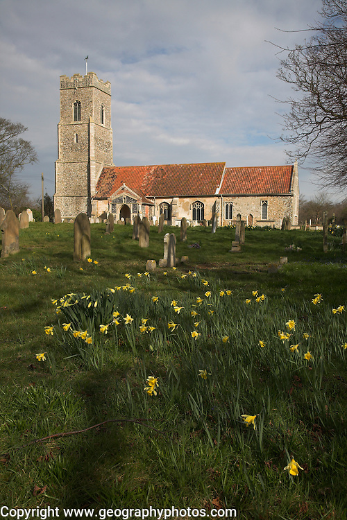 Saint John the Baptist church in early spring with daffodils Snape, Suffolk, England