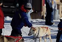 Takotna Boy Pets Bill Cotter's Dog Takotna