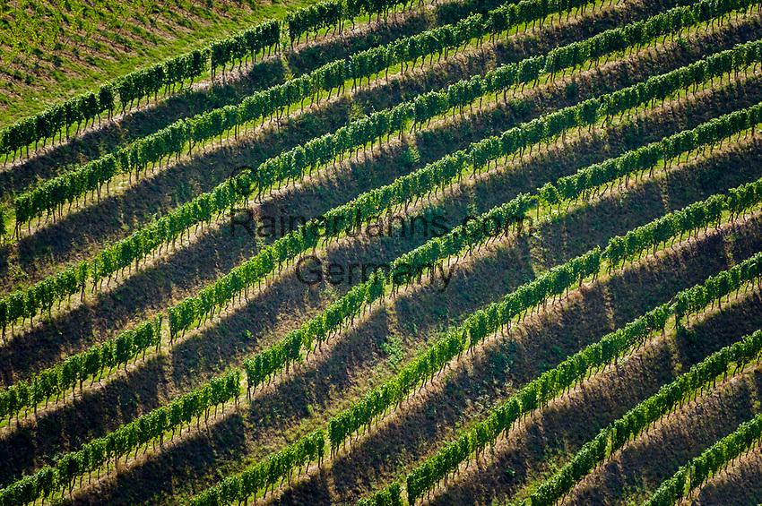 Germany, Baden-Wuerttemberg, Black Forest, District Ortenau, Durbach: terraced vineyards of vineyard Margrave of Baden | Deutschland, Baden-Wuerttemberg, Schwarzwald, Ortenaukreis, Durbach: Weinterrassen des Weinguts Markgraf von Baden