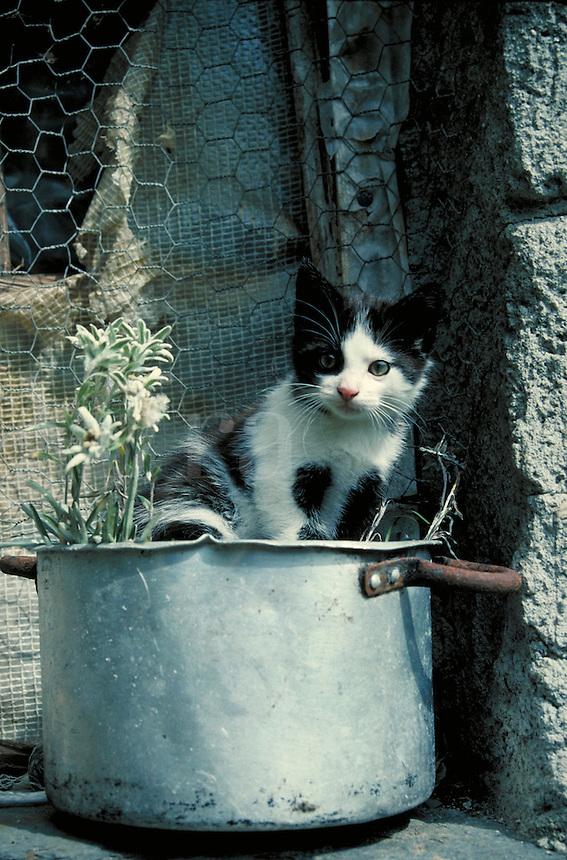 Kitten plays in window sill. Switzerland Europe.