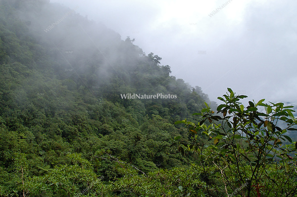 Lush vegetation in the cloud forest of Braulio Carrillo, Costa Rica