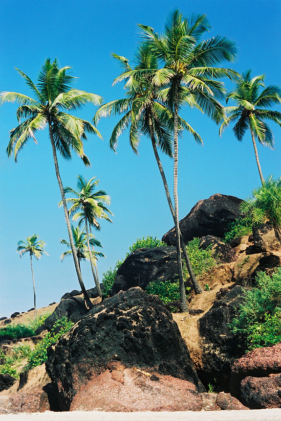 Palm trees and pink and black rocks mark the edges of Arambol beach, Goa, India.