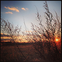 """The sun sets over """"Logan Triangle"""" on February 20, 2013. Logan Triangle is a swath of land in the Logan section of Philadelphia where houses collapsed over a period of decades. Today the area is fields of weeds, although the city has entertained redeveloping the fields."""