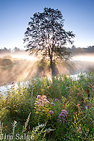 Sunrise on a cool summer morning creates streams of light over a New Hampshire field.  A few Joe Pye Weed flowers are highlighted in the foreground.
