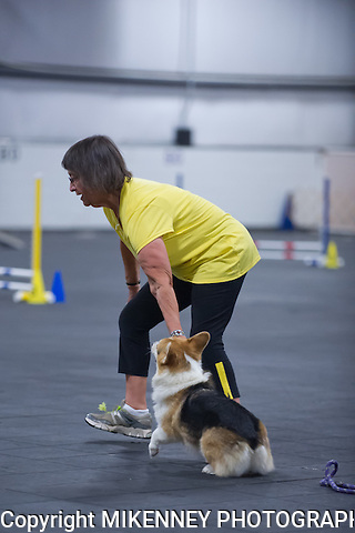 CPE Agility Trial held August 17, 2013 at Boomtowne Canine Campus in Farmington NY