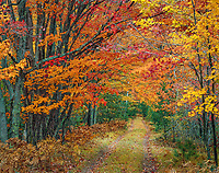 Vilas County, WI: Two track road leading through a deciduous forest in a full regale of fall colors in the Northern Highland American Legion State Forest