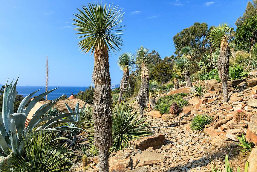 Le Domaine du Rayol:<br /> le jardin d'Am&eacute;rique aride domin&eacute; par les Yucca rostrata , &eacute;galement, Dasylirion, agaves et cact&eacute;es.