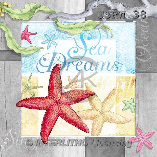 Randy, STILL LIFE STILLLEBEN, NATURALEZA MORTA, paintings+++++CF-Sea_Dreams,USRW38,#i# maritime,sea shells