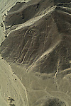 The Nazca lines are a series of geoglyphs located in the Nazca Desert, a high arid plateau that stretches more than 80 km (50 miles) between the towns of Nazca and Palpa on the Pampas de Jumana in Peru. Although some local geoglyphs resemble Paracas motifs, these are largely believed to have been created by the Nazca culture between 200 BC and AD 700. There are hundreds of individual figures, ranging in complexity from simple lines to stylized hummingbirds, spiders, monkeys, fish, sharks or orcas, llamas, and lizards.