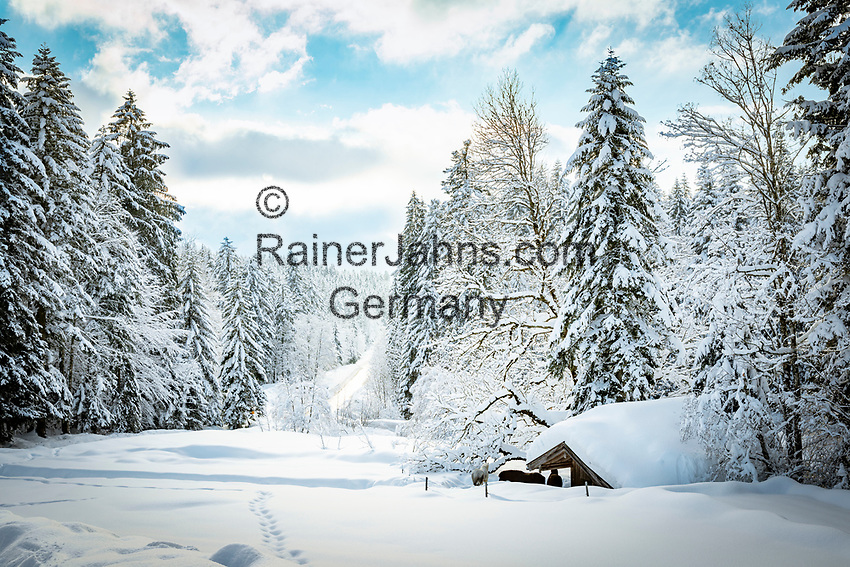 Deutschland, Bayern, Chiemgau, Inzell, Ortsteil Adlgass: Winterlandschaft beim Forsthaus Adlgass | Germany, Upper Bavaria, Chiemgau, Inzell, district Adlgass: winter scene near Forester's House Adlgass