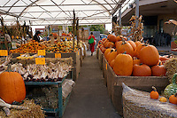 Pumpkins and squash for sale at the Jean Talon Market, Montreal, Quebec, Canada