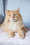 Tan Longhaired Cat on Chair