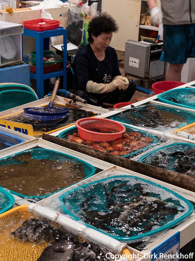 Fischmarkt in Tongyeong, Provinz Gyeongsangnam-do, S&uuml;dkorea, Asien<br /> fishmarket of Tongyeong,  province Gyeongsangnam-do, South Korea, Asia