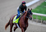 LOUISVILLE, KENTUCKY - APRIL 28: Country House, trained by William Mott,  exercises in preparation for the Kentucky Derby at Churchill Downs in Louisville, Kentucky on April 28, 2019. John Voorhees/Eclipse Sportswire/CSM