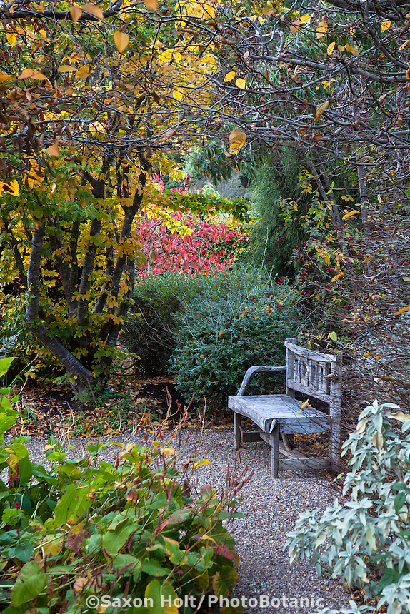 Bench at end of path in secret garden looking down shrub border Gary Ratway autumn garden