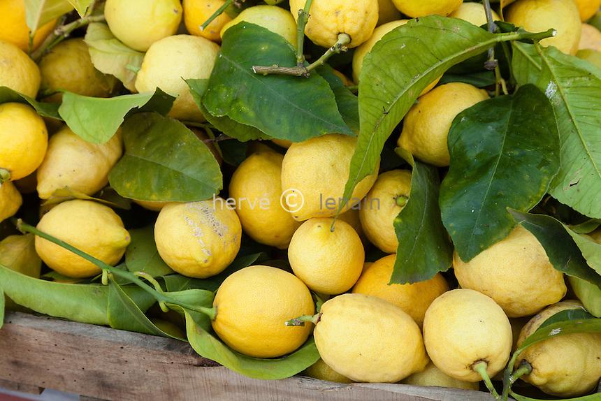 France, Alpes-Maritimes (06), Menton, dans les jardins Bioves lors de la fête du Citron, stand de la pépinière de la Colla de Laurent Gannac, citrons de Menton