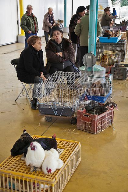 Europe/France/Midi-Pyrénées/82/Tarn-et-Garonne/Castelsarrasin:  sur le marché aux volailles vivantes