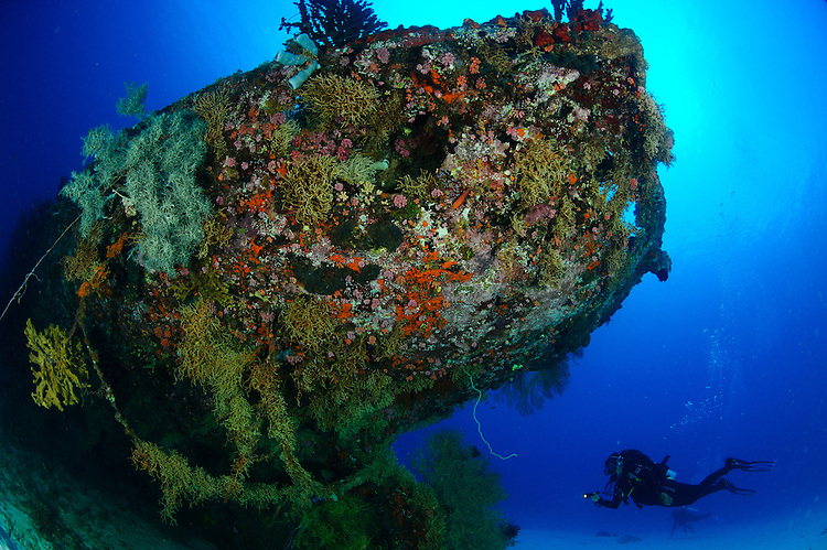 A diver under the coral encrusted stern of the cross wreck, a Japanese coaster sunk in WW2. Manokwari, West Papua