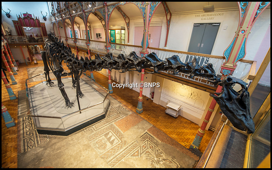 BNPS.co.uk (01202 558833)<br /> Pic: PhilYeomans/BNPS<br /> <br /> Dippy the Dinosaur makes her first appearance at the Dorchester Museum near the Jurassic Coast in Dorset.<br /> <br /> Dippy the Diplodocus today went on display outside of London for the first time in over 100 years as he began the first leg of a two year tour of the country.<br /> <br /> The Natural History Museum's iconic 292-piece dinosaur skeleton was painstakingly taken down, packed in 12 crates and transported to the Dorset County Museum where he will spend the next three months. <br /> <br /> At 70ft long Dippy just about squeezed into the museum's Victorian Hall gallery which measures 71ft. Experts had to remove some balcony balustrades to fit him in with just four inches to spare.