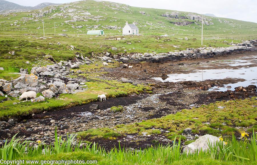 Croft house on Vatersay island, Barra, Outer Hebrides, Scotland, UK