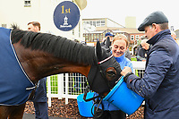 Winner of The British Stallion Studs EBF Upavon Fillies' Stakes Fanny Logan ridden by Robert Havlin and trained by John Gosden has a drink in the Winner's enclosure during Horse Racing at Salisbury Racecourse on 14th August 2019