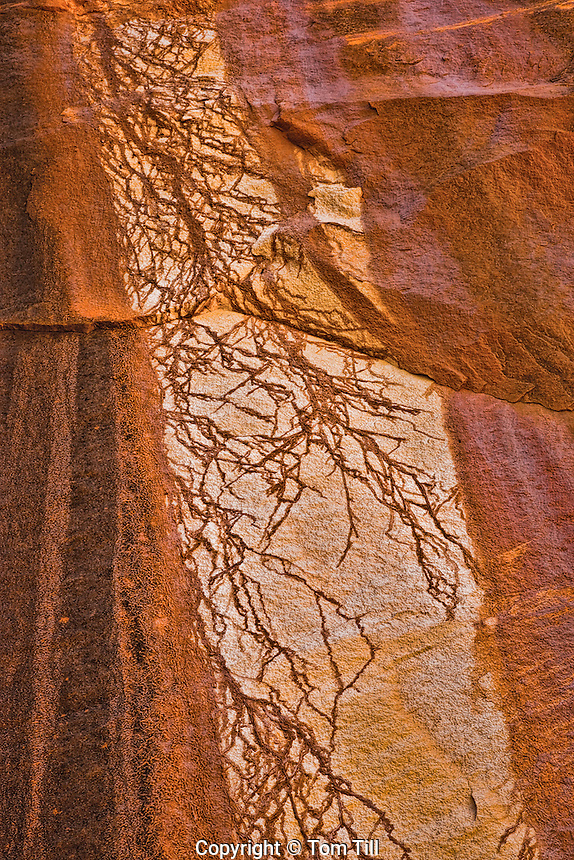 Rock patterns.Canyonlands National Park, Utah.Needles District.Stains on light rock from surrounding patina