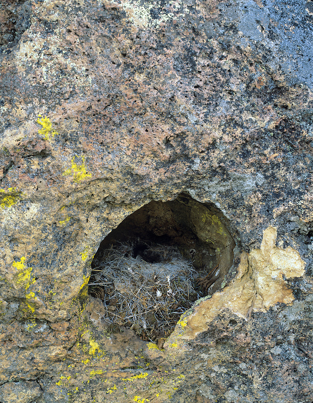 Birds nest in rock hole. Near Leslie Gulch, Oregon