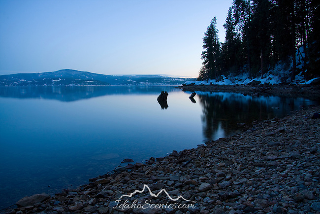 Idaho, Coeur d'Alene. Driftwood protrudes from the calm water of Lake Coeur d'Alene near Tubbs Hill at dusk in winter.