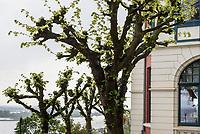 Blick auf die Elbe vom Restaurant Hauser S&uuml;llberg, S&uuml;llbergsterrasse 12, Hamburg-Blankenese, Deutschland, Europa<br /> View on river Elbe from  Restaurant Hauser S&uuml;llberg, S&uuml;llbergsterrasse 12, Hamburg-Blankenese, Germany, Europe