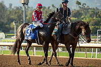 "ARCADIA, CA  APRIL 7:  #3 Midnight Bisou, ridden by Mike Smith, gives ""side eye"" in the post parade of the Santa Anita Oaks (Grade l) on April 7, 2018, at Santa Anita Park in Arcadia, Ca. (Photo by Casey Phillips/ Eclipse Sportswire/ Getty Images)"